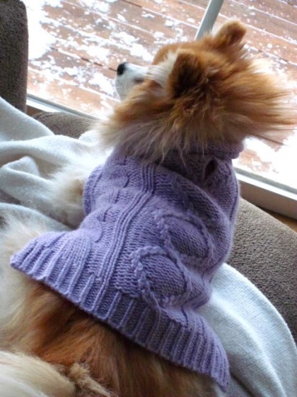 Fuzzy's new sweater...she was NOT a fan!