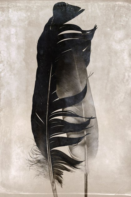 Feathers_v1_20x30-web